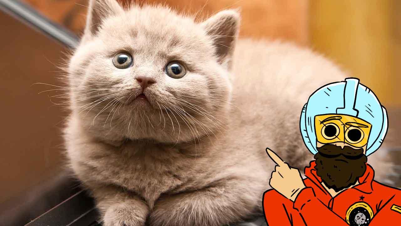 los gatos se pueden entrenar portada